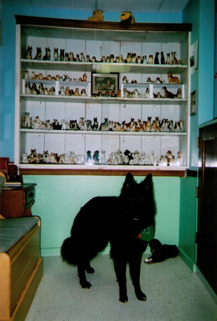 Dog with china display